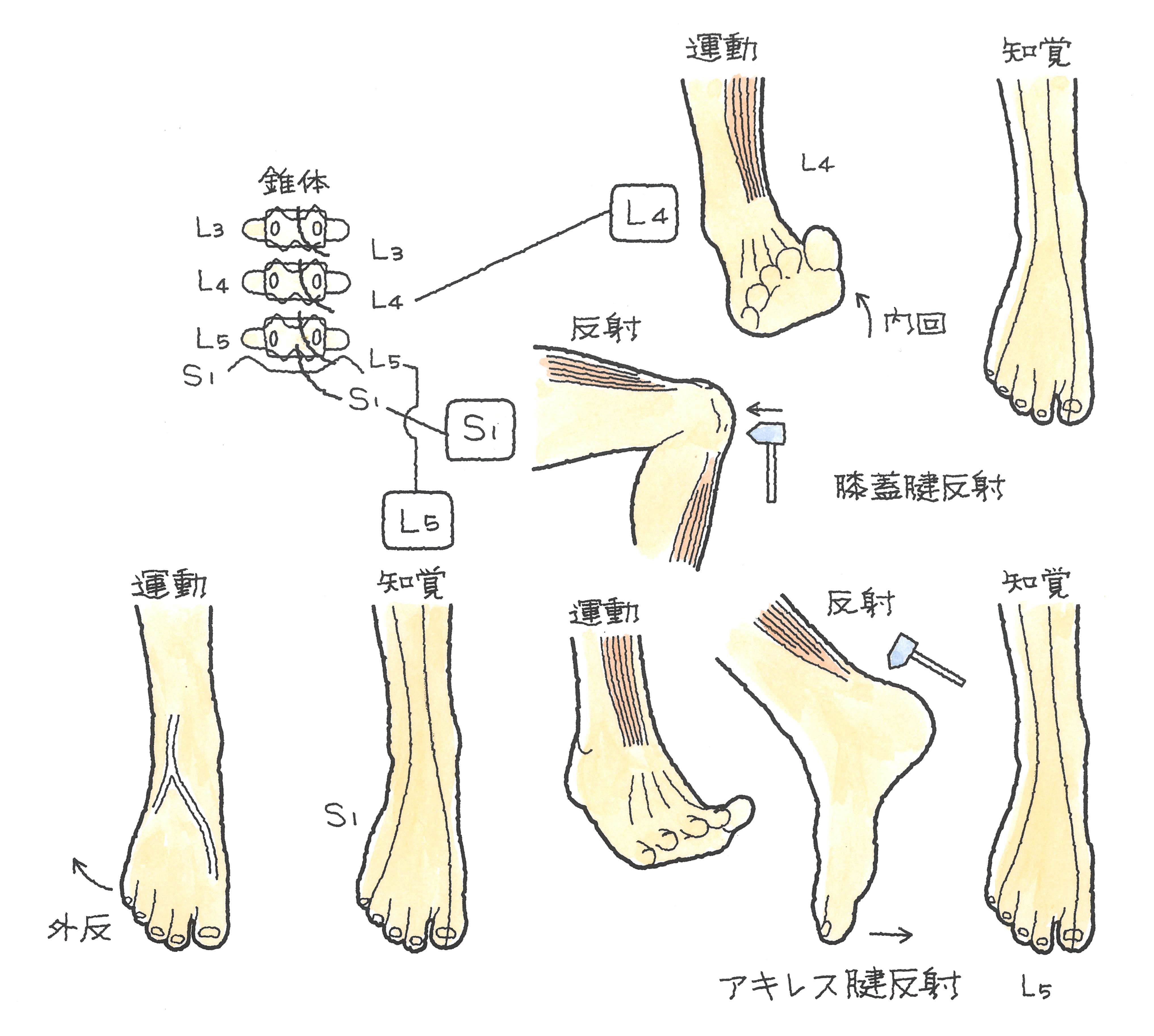 57-3.jpg
