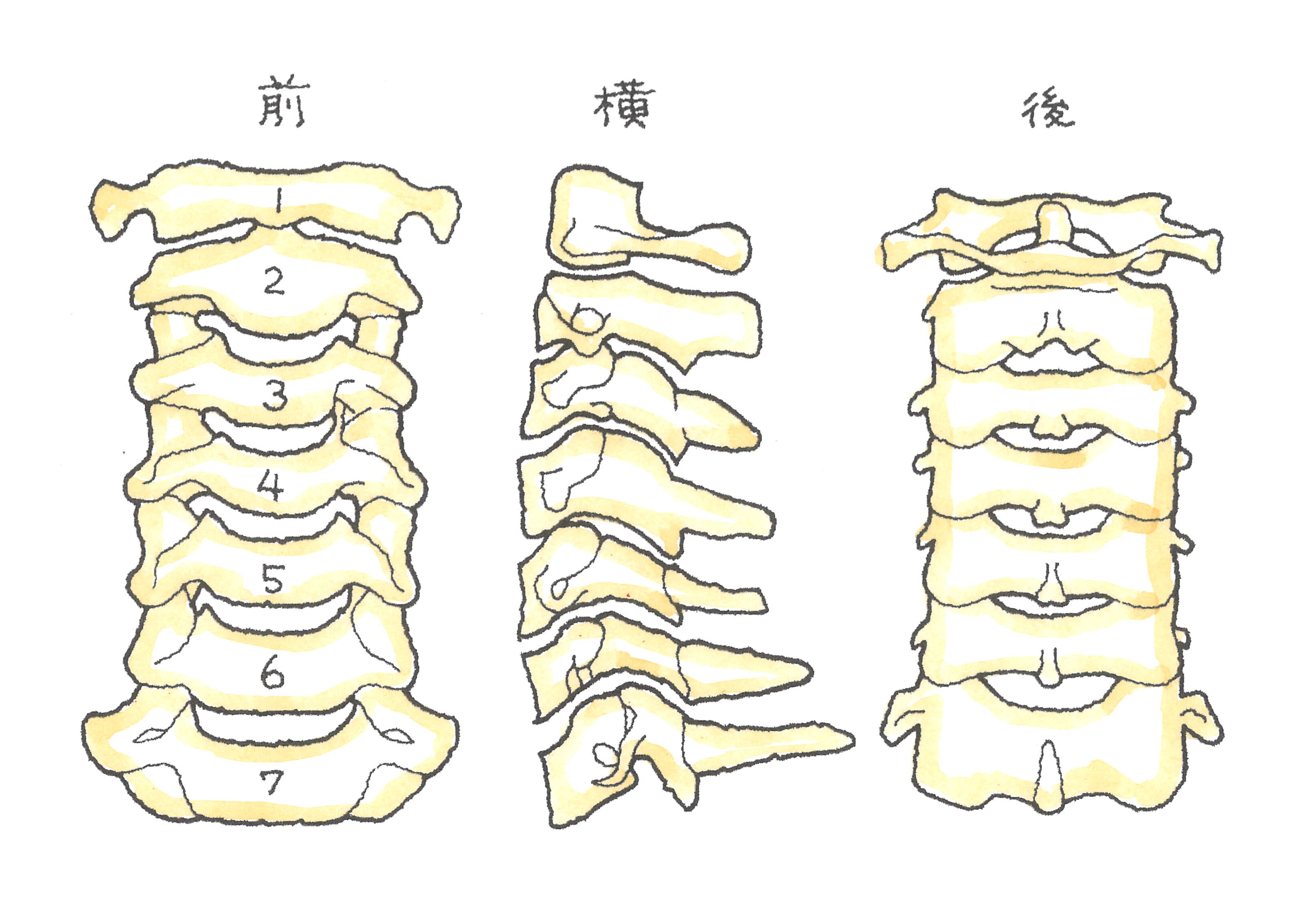 60-3.jpg